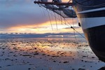 Kleine afbeelding 5 van Dagtocht op de Waddenzee