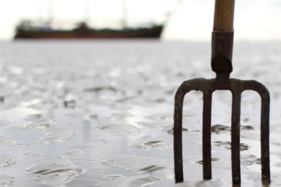 Detail image of Discover the Wadden Sea bottom