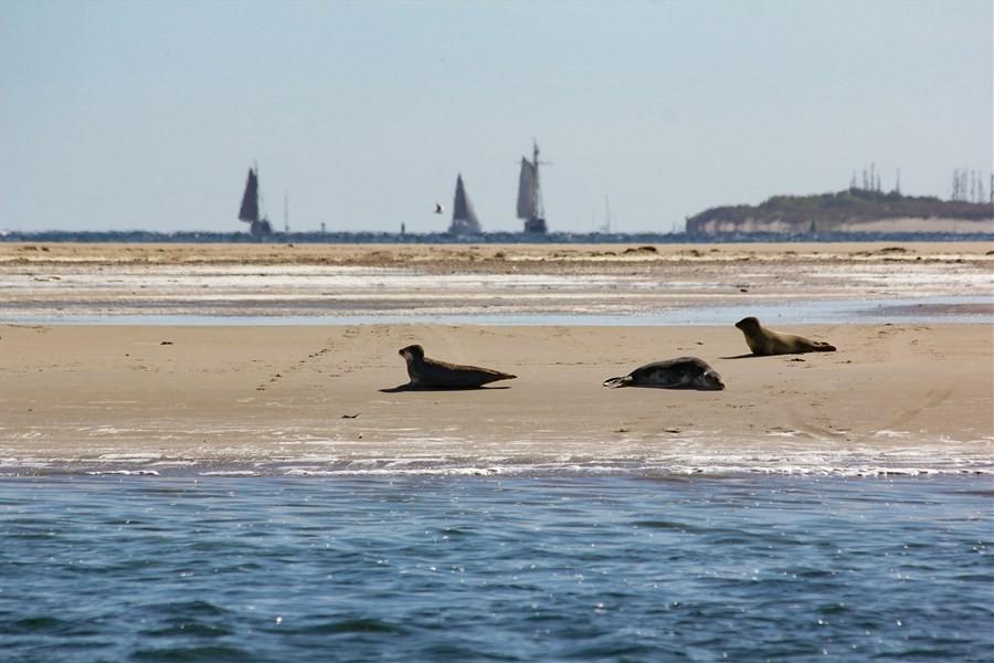Detailbild von Wochenende Wattenmeer