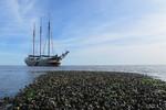 Miniaturansicht 6 von Tagesausflug Wattenmeer