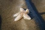 Miniaturansicht 21 von Tagesausflug Wattenmeer