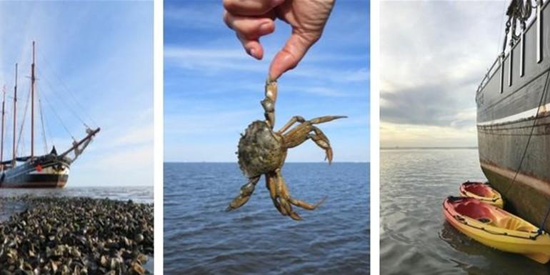 Blog Droogvallen op de Waddenzee met de Linde 700X300